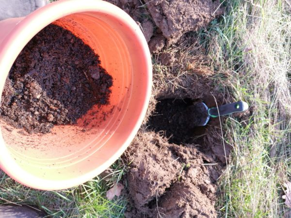 Biochar application to hole